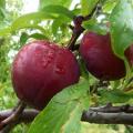 trái cây nhiệt đới